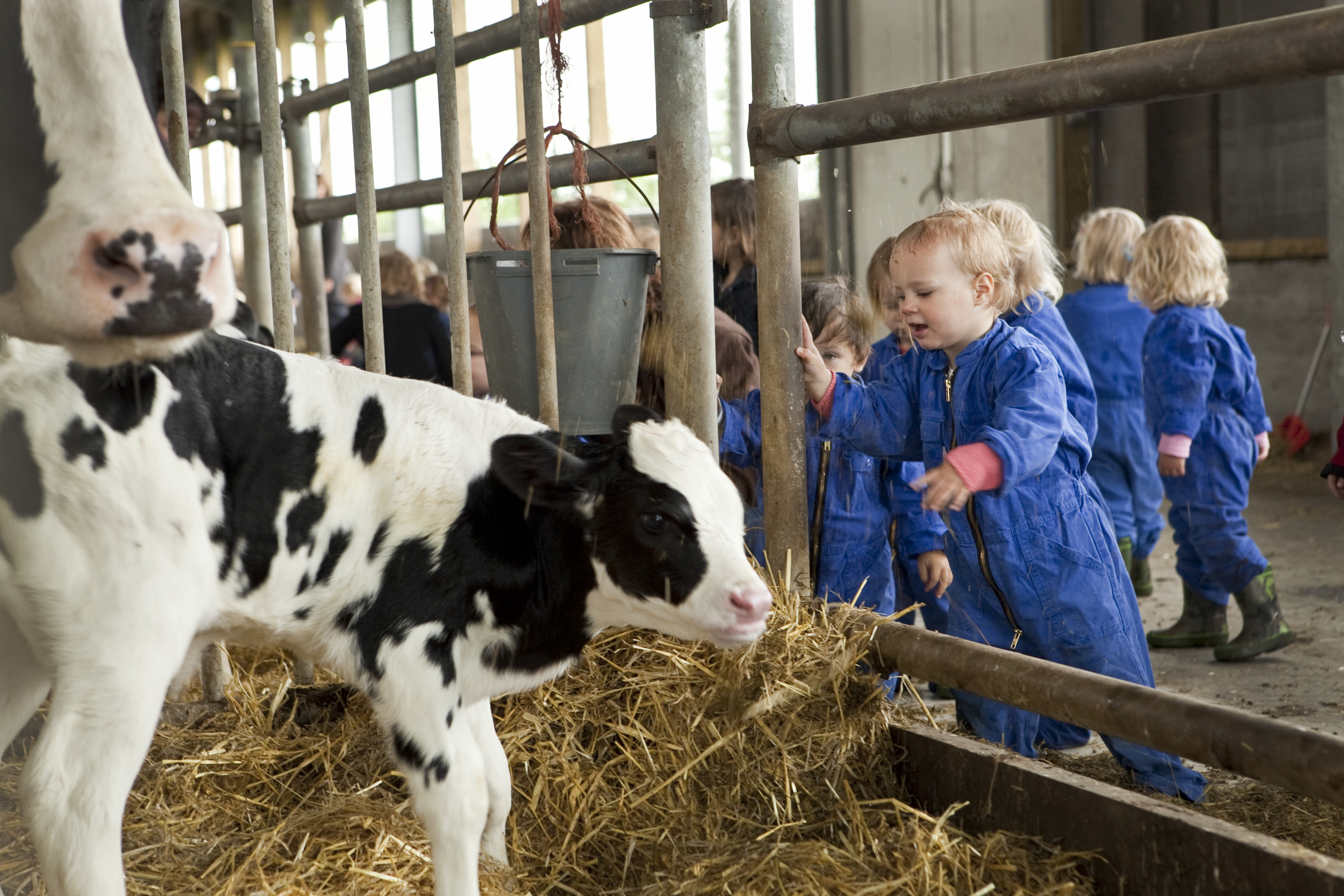 Natuurlijk Avontuurlijk Kinderdagverblijf In Culemborg